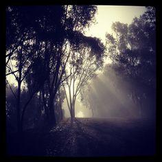 Foggy nature walks      San Clemente, CA