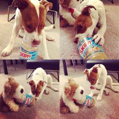They gave him an empty jar of peanut butter and he shared it with his stuffed friend.