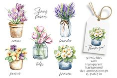 Watercolor Drawing, Watercolor Flowers, Pansies, Tulips, Free Advertising, Spring Flowers, Digital Illustration, Lavender, Artisan