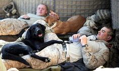 BERRY hot men: Soldiers with dogs (22 photos) - dog-soldiers-4