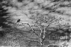 Title:  Keeping A Lookout   Artist:  Cindy Tiefenbrunn   Medium:  Photograph - Digital