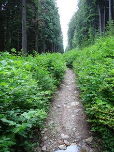 moutain bike trail