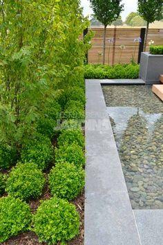 Boule Buxus sempervirens, paysagiste Jonathan Mark Buxus Sempervirens, Water Features, Outdoor Gardens, Sidewalk, Mid Century, Ideas, Garden, Most Beautiful Gardens, Garden Deco