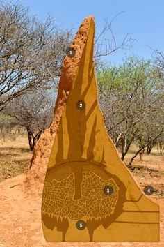 The Animal House - The Incredible Termite Mound - forever-evolving cities, made from the simplest materials. Working independently, without any coordinator or blueprint to reference, they construct temperature-controlled environments that include elaborate ventilation and cooling systems, and specialized chambers that store food, contain fungal gardens, hold eggs, and house the egg-producing queen. More ...