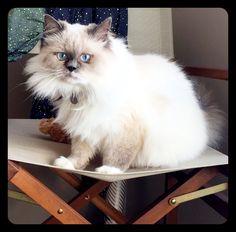 Boo Cat | Pawshake