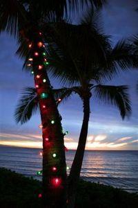 Hawaiian Themed Christmas Decorations Tree & Wreath thumbnail
