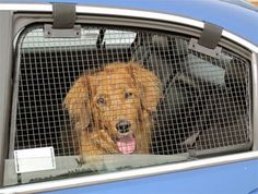 mesh screnning for car windows | BreezeGuard Metal Screens for Car Windows, Keeps Dogs Cool & Safe!
