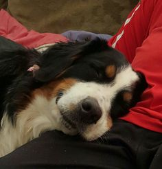 Snoozing on Dads lap