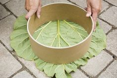 Here's how to make your own concrete stepping stones with an organic design that you can create using elements from your own garden. These concrete stepping stones are much nicer than the ready-made ones you buy and are quick and easy to make.