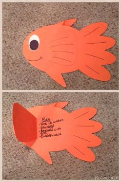 This fish is for teaching animal classification.  The fin opens up so students can write facts about fish!