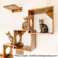 Diy Cat Shelves, Wall Shelves Design, Cat Climbing Shelves, Cat Wall Furniture, Cat Steps, Cat Perch, Cat Towers, Cat Playground, Cat Enclosure