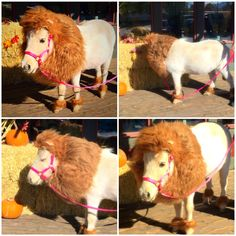 Tinkerbell the lion