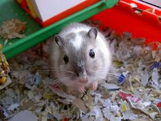 Why Are Gerbils Illegal in Some Places?  Find out at - Yahoo! Voices - voices.yahoo.com