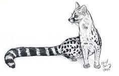 Genet Cat   Genet sketch by silvercrossfox