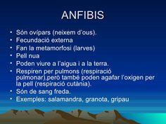 Classificació dels animals Lungs, Animales