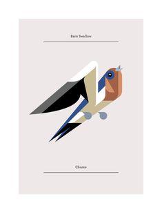 Barn Swallow, Flora and Fauna series, Birds edition - Josh Brill
