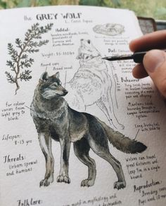 """Canis lupus"", The Grey Wolf  Custom Journal Page for William. I think I've always taken wolves for granted up until now, but there's a…"