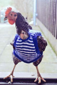 Tweet of the Day - @BBCRadio4 Chicken Jumper representing Agriculture in Modern Society #knitR4 (@kirstykilts)