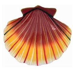 Shells | Conchas - #Shells