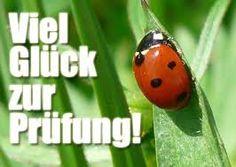 7 Besten Glück Prüfung Bilder Auf Pinterest Best Of Luck Good