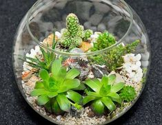 Because succulents do not like wet environments, a few tips and adjustments to the traditional terrarium are required. Click this article to find out how to make a succulent terrarium that will keep the little plants happy and healthy. Growing Succulents, Cacti And Succulents, Planting Succulents, Cactus Plants, Terrarium Plants, Succulent Terrarium, How To Make Terrariums, Little Plants, Cactus Flower