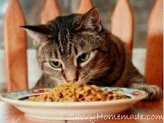 Homemade Cat Treats