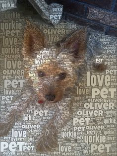 How to Use Wordfoto - great for vocabulary and poetry