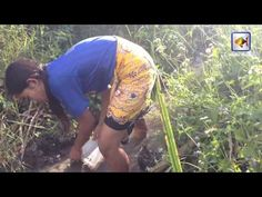 Amazing Fishing in Cambodia - How to Fishing at Kampong Cham