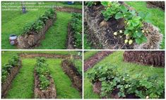 use straw bales to grow plants in