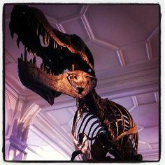Stan, our T.rex by @2bdix
