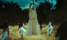 The wild one - Rebeca Cygnus