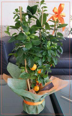 Citrofortunella microcarpa sau mai pe scurt madarin pitic! Este o specie a genului Citrus, obținută din încrucișarea unui mandarin cuun kumquat.  #mandarin #citric #green #orange #daruieste #homedecoration #plants #flori #special #gift #surprise #artist #florist #culori #sun #summer #florarie #bloomeriadesign #workwithlove #exotic #bucharest #shoponline #bloomeria #welcometotheworldofflowers Plants