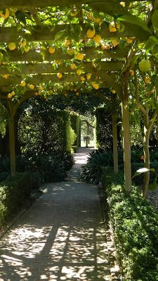 lotusland, santa barbara, ca ~ fruit tree arbor