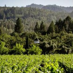 Sinegal Estate Winery