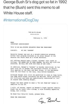 George Bush Sr's dog got so fat in 1992 that he (Bush) sent this memo to all White House staff. Music Memes, Music Humor, All Points Bulletin, Bush Jr, White House Staff, How To Cure Depression, History Memes, Funny People, Funny Things