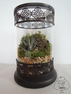 classy pictures of cactus house plants. Classy Sunbathing plants  Terraria Window and Plants