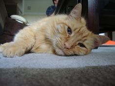 MARMALADE THE CAT HAS BEEN STOLEN AND DUMPED, HE NEEDS TO BE HOME WITH HIS MUMMY. PLEASE SHARE