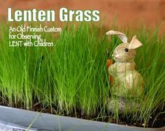 Plant Lenten Grass on Ash Wednesday - great way to observe Lent with kids