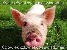 Do przemyślenia… | www.MotywujSie.pl