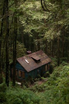 blå ton på stugan #forest #cabin #stuga #skog