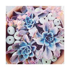 Bittersweet Nouveau ❤ liked on Polyvore featuring pictures, photos, backgrounds, flowers, purple and filler
