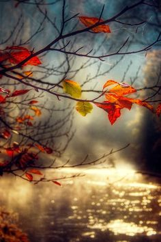 Colourful autumn leaves in front of a river scenery at sunrise Autumn Day, Autumn Leaves, Autumn Morning, Happy Autumn, Morning Mood, Red Leaves, Morning Light, Belle Photo, Pretty Pictures