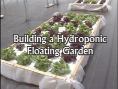 A step-by-step tutorial on building a floating hydroponic garden, provided by the University of Florida/IFAS Extension and it's Virtual Field Day web site: h...