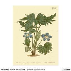Palmated Violet Blue Illustration Postcard