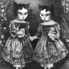 art-black-and-white-cat-drawing-kitty-Favim.com-149612_large.jpg (500×500)