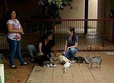 """""""O Grito do Bicho"""": Número de gatos abandonados nas ruas de Uberaba ge..."""