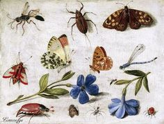 """Jan van Kessel the Elder  """"Butterflies and other insects"""" (1661)"""