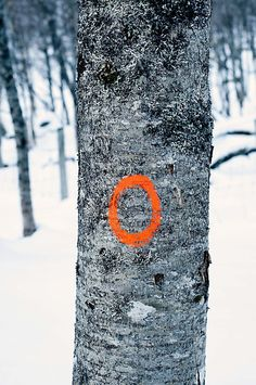 Orange sirkel paa bjoerk