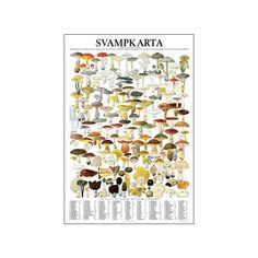 Affisch – Svampkarta   Svamp.se