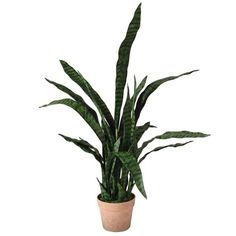 Faux Sansevieria Plant in Pot | Home Decor | England At Home Faux Plants, Potted Plants, Cactus Plants, Sansevieria Plant, Mother In Law Tongue, England Houses, Plastic Pots, Snake Plant, Modern Bohemian